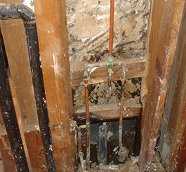 Mold Inspection & Remediation